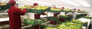 FIA lanza instrumentos para elevar competitividad del agro